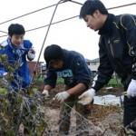 新入職員が農業体験!3回の体験で野菜づくりの一連の流れを学習!