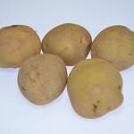【三鷹】ジャガイモ植付け講習会の開催日が決まりました