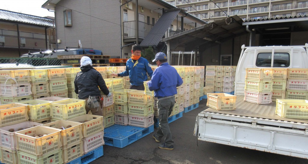 東京むさし・0121・B三鷹の人気商品!キウイワインの原料を出荷トリミング