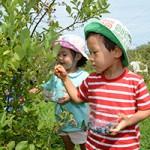 親子で楽しく!収穫体験のご案内/三鷹市・国分寺市・小平市