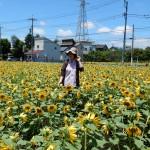地域に癒しを与える ヒマワリ畑/小金井市