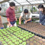 種まきや収穫をお手伝い!新入職員が農業体験研修!