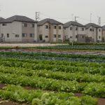 11月2日は「都市農業の日」です