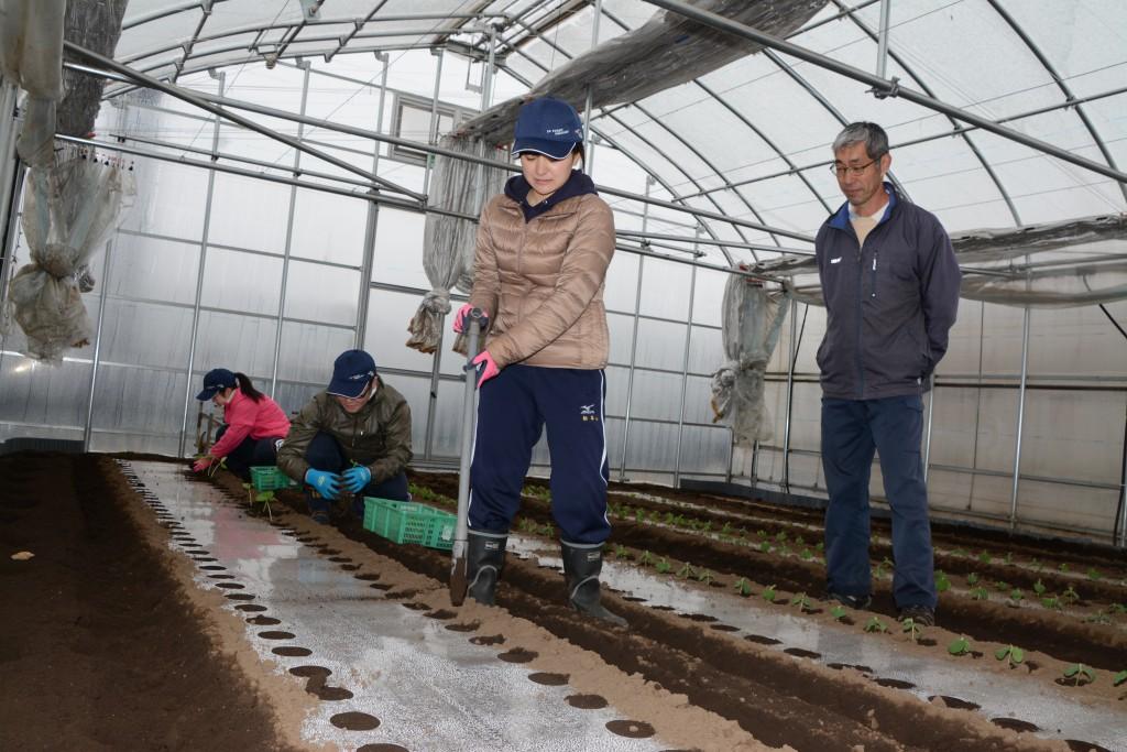 東京むさし・0408・B新入職員が農業体験DSC_8339