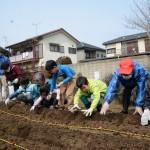 本店の畑で子どもたちがジャガイモ植付け体験/小金井