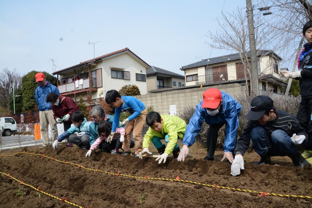 東京むさし・0314・本店の畑で子どもたちが農業体験DSC_6807