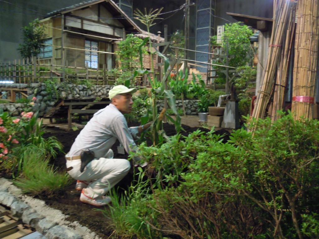 東京むさし・日付なし・A映画「母と暮せば」に三鷹産野菜を提供DSCN5848 - コピー