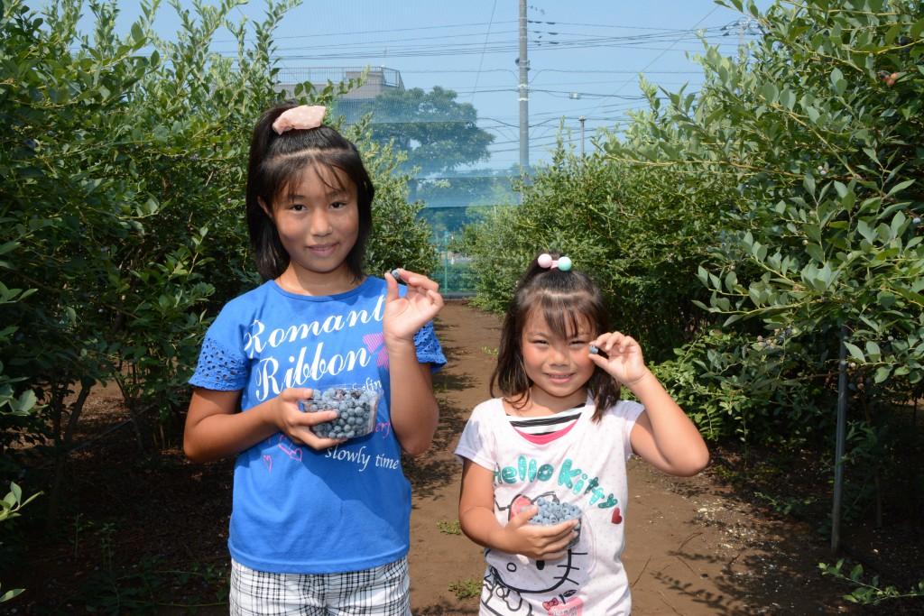 東京むさし・0807・B積金利用者 ブルーベリーの収穫楽しむDSC_8424