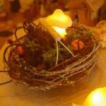 【参加者募集】10/22(木)秋の実りの寄せ植え講座/国分寺支店