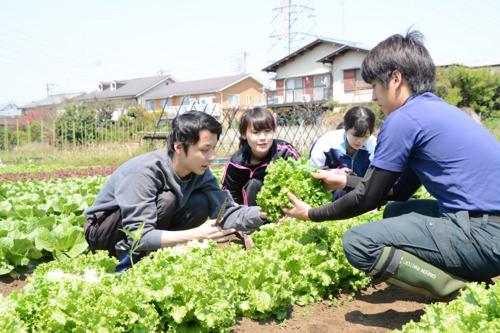 東京むさし・0412・B新入職員が農業体験DSC_2514