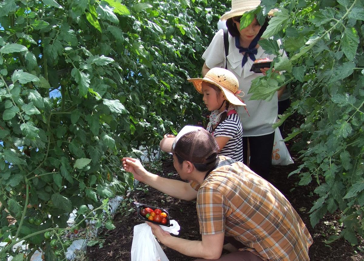 都市農業体験ツアーの実施