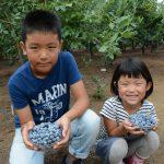 親子で楽しく!収穫体験のご案内/三鷹市・小平市・国分寺市