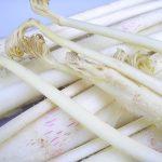 【参加者募集】3/6(金)国分寺産 うど料理教室/国分寺支店